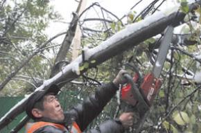 Город лишился почти 500 деревьев в предыдущий уик-энд