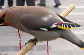 Причина гибели птиц до конца не ясна