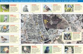 Энтузиасты из Бирюлево помогают ученым изучать птиц района