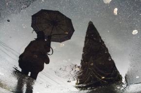 Тепло зимы: на календаре декабрь,  а на улице — ни снега,  ни настоящего мороза