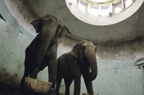 Московских цирковых слоних собираются продать с аукциона