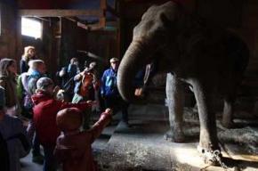 Накорми слониху