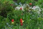 В садике на улице Ленсовета цветут мечты и созревают решения: Фоторепортаж