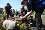 На Заневском проспекте посадили 10 тысяч цветов: Фоторепортаж