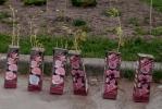 У входа в парк Городов-героев ночью появились розы: Фоторепортаж