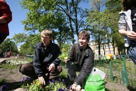 На Заневском проспекте посадили 10 тысяч цветов: Фото