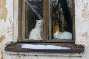В Чите родственники «променяли» малолетнего ребенка на кошек и собак