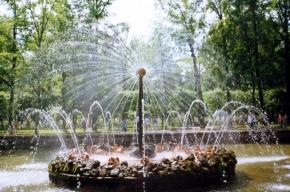 Общественники волнуются за чистоту воды в петергофских фонтанах