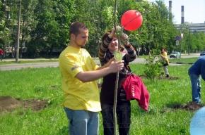 Молодежь посадила в Петербурге новую аллею
