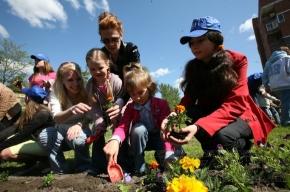 На Заневском проспекте посадили 10 тысяч цветов