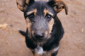Собакам запретили появляться в Пискаревском лесопарке