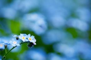 На проспекте Космонавтов соседи обеспечили двору цветущий вид