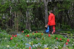 В садике на улице Ленсовета цветут мечты и созревают решения