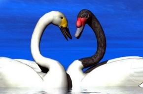Ученые поняли, на чем построена любовь