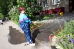 У дома № 7 на Пулковской улице – клумбы с бархатцами и крокодилами: Фоторепортаж