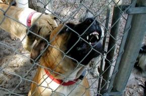 В Курортном районе собаки разорвали ребенка
