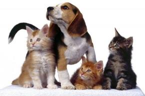 В Интернете появилась социальная сеть для собак и кошек