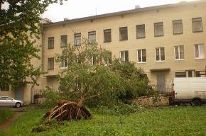 Упавшее дерево у детской поликлиники лежало два дня