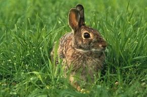 Помешанная на кроликах вновь арестована