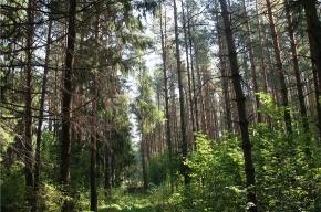 В Ленобласти искали потерявшегося в лесу школьника