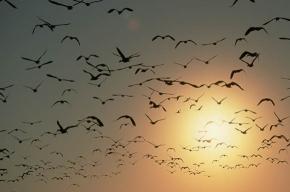 В Австралии с неба падают мертвые птицы