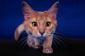 Ученые считают, что кошки глупее птиц