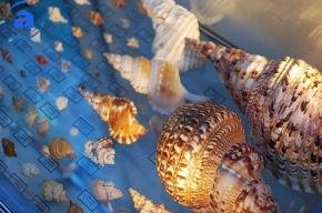 Раковину-миллионера можно найти в Ленинградском зоопарке