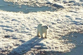 Путин учредил новый парк - Русская Арктика