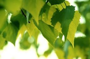 Что сделать, чтобы двор зеленел