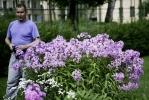 В Тургеневском переулке есть ромашковый рай: Фоторепортаж