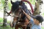 В Ям-Ижоре живут, как соседи, кони, люди и медведи: Фоторепортаж
