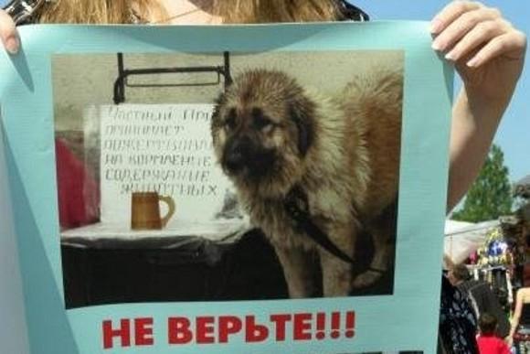 Защитники животных проведут пикет против «коробочников» и псевдоприютов: Фото