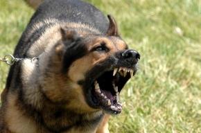 Закон для владельцев собак примут уже осенью
