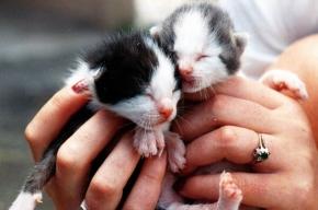 Из квартиры на Товарищеском проспекте освободили котят