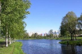 В Муринском парке отметят день Калининского района
