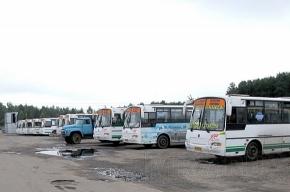В Старом Петергофе бунтуют водители автобусов