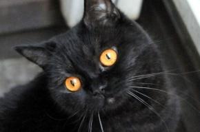 Кошки манипулируют людьми с помощью мурлыканья