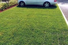 В Петербурге появятся газонные решетки для парковок
