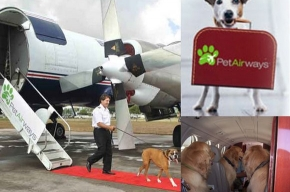 В США появилась авиакомпания для зверей