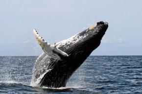В Ванкувере лайнер столкнулся с китом