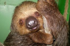 В Петербургском зоопарке появились новые экзотические животные