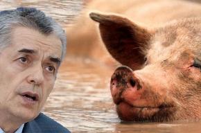 В России вспышка свиного гриппа?