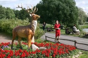В Муринском парке сохранились «идолы»