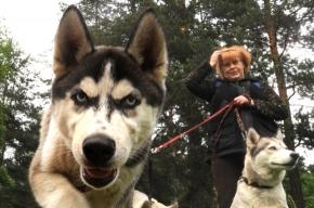 Белой ночью в Петергофе люди и собаки получили взаимное удовольствие