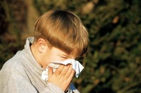 Еще три случая заражения свиным гриппом в России: вирус привезли с Кипра и Таиланда