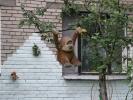 В нашем районе - мода на плюшевые зоопарки: Фоторепортаж