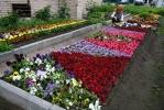 Фоторепортаж: «Цветочной плантации на Светлановском требуются люди»