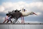 Летающая ванна из Петербурга победила в чемпионате по полетам в воду: Фоторепортаж