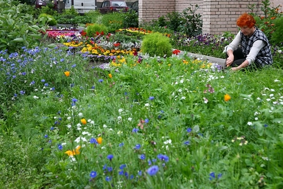 Цветочной плантации на Светлановском требуются люди: Фото
