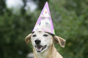 Самый старый пес на Земле отметил свое 26-летие